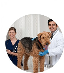 pet-care-img1